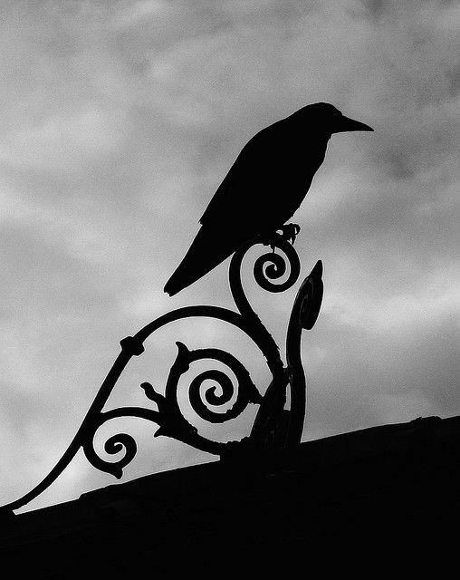 Why have I yet to get a crow tattoo ??/ I've been...