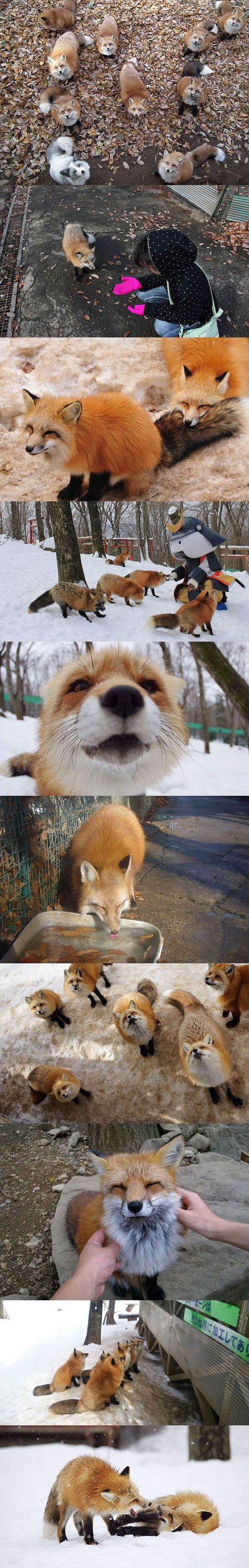 Fox Village In Japan..... so we are not going to a...