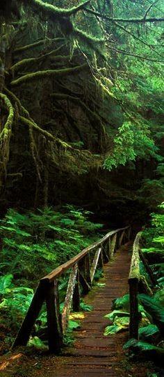 Footbridge in the forest of Mt. Rainier National P...
