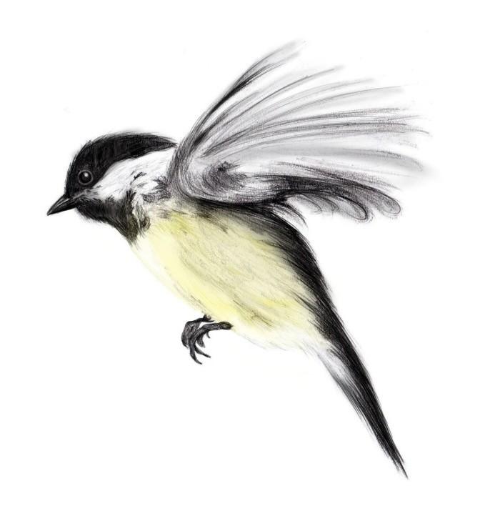 Bird - Coroflot ecochran