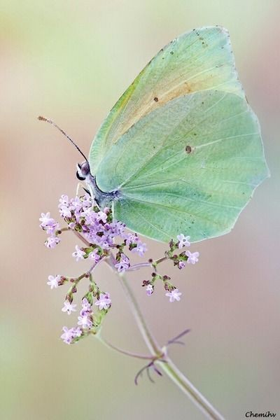 The celadon - very intense yet pale - would be ter...