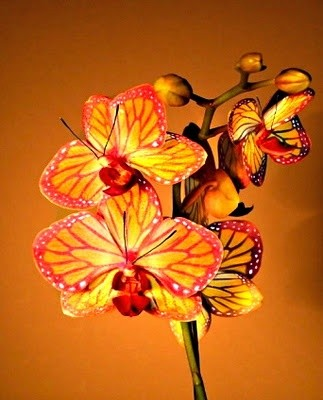 Butterfly Orchid.  I loved looking at and picking...