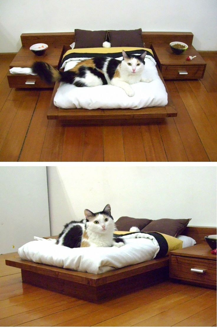 A platform bed for our cats, complete with night s...