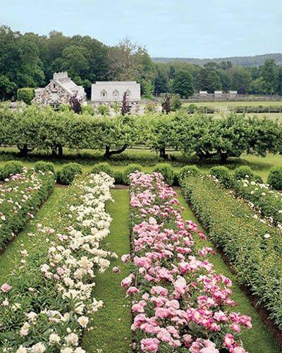 2. My Garden - Martha Stewart's garden.  Peonies....