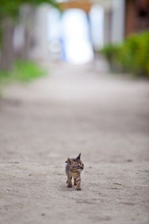 Exploring this big world alone awwww  -  AMAZING h...