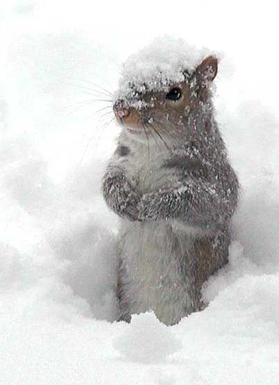 Snow Squirrel....adorable! I'm lucky to have a cop...