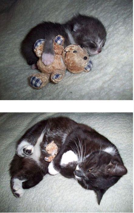 Can't take it cuteness!