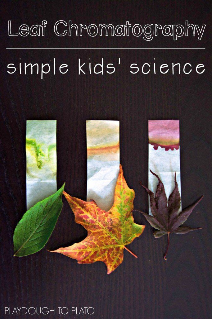 What an awesome kids' science experiment! Find the...