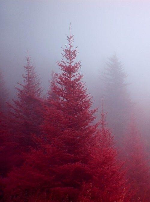Fog in the Firs | Blue Ridge Parkway, Transylvania...