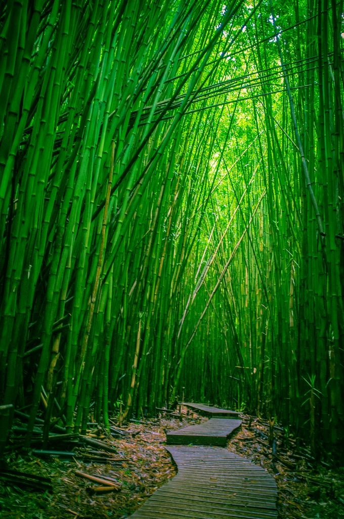 How have I not hiked this in Maui?!? Next time!  -...