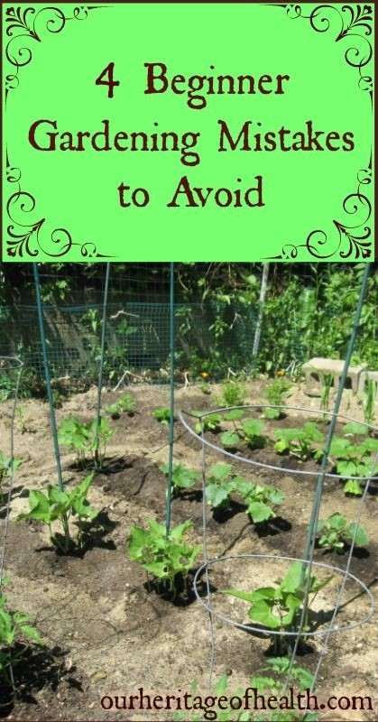 4 beginner gardening mistakes to avoid | Our Herit...