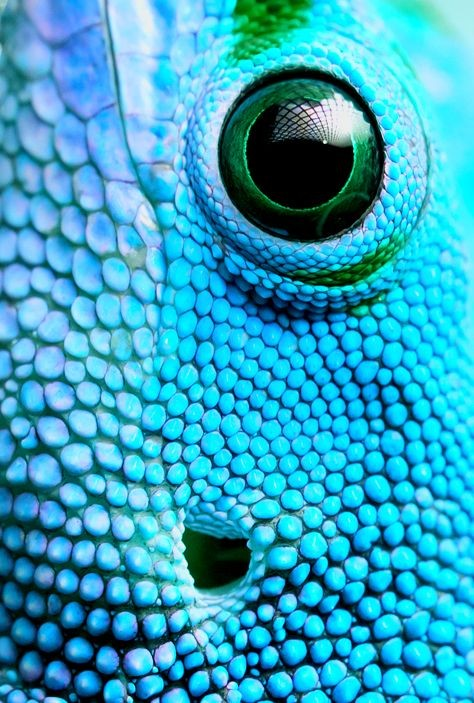 This creature is serious about bright blue.  #devi...
