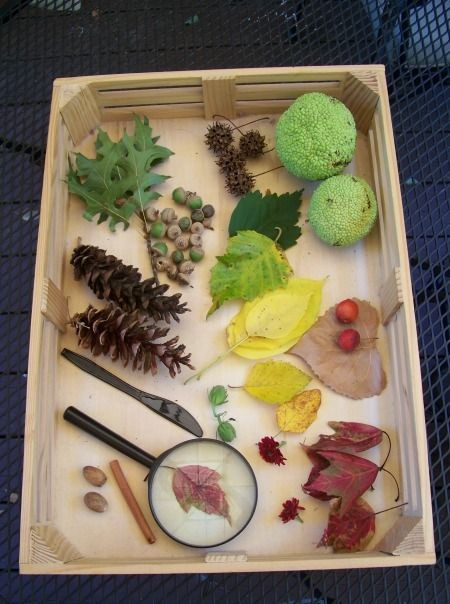 Create a Fall Nature Tray -- a simple activity tha...