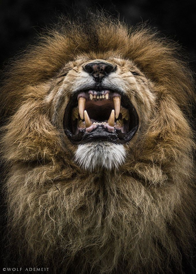 New Powerful Portraits of Animals by Wolf Ademeit...