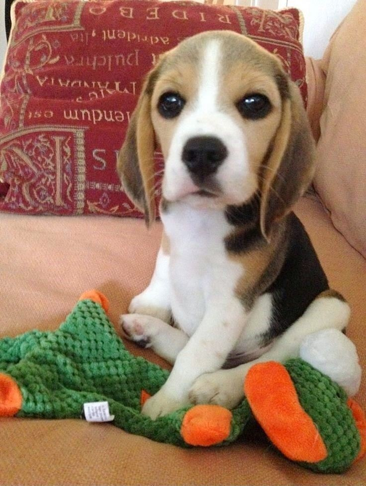 She is so cute she almost looks fake! -5 Best Dog...