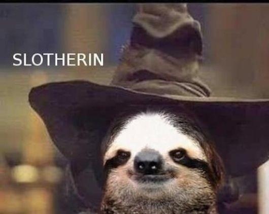 ahahahahahahaha! They should totally let sloths go...