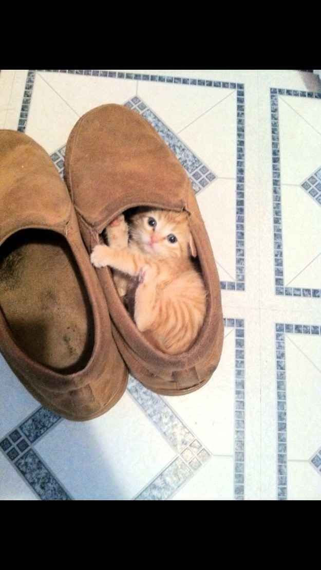 24 Ways Your Day Could Be Ruined By Cuteness