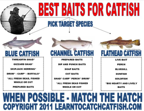 fishing rigs for catfish | Best Catfish Bait, Catf...