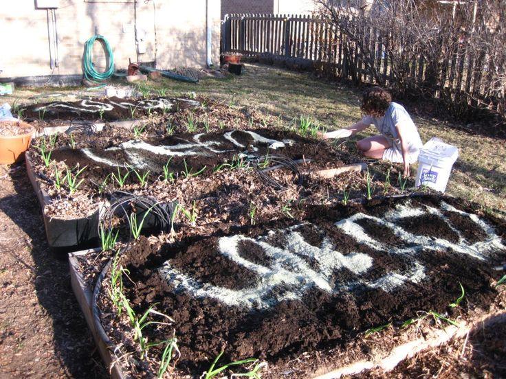 Spring soil prep for the organic vegetable garden-...