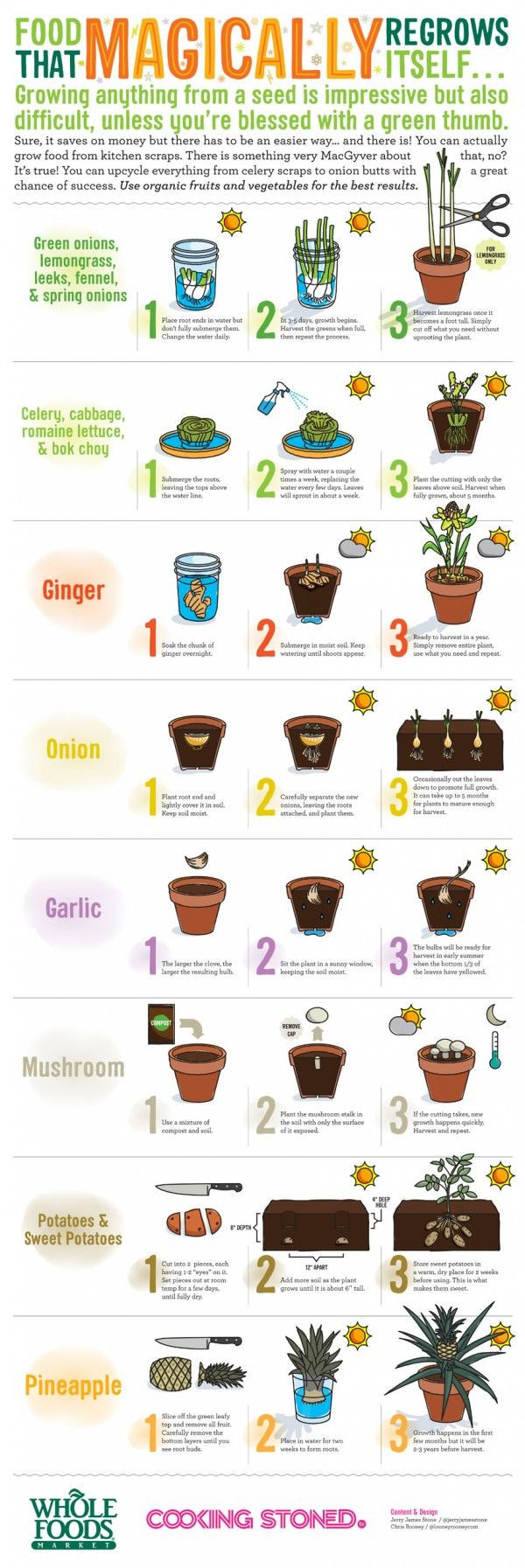 Food That Magically Regrows Itself from Kitchen Sc...