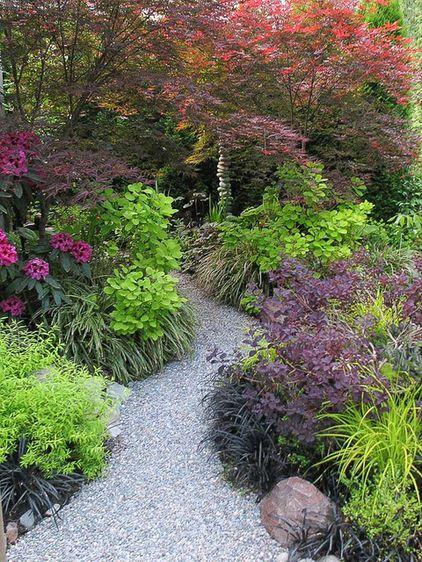 shades of purple provided by 'Beni Otake' Japanese...
