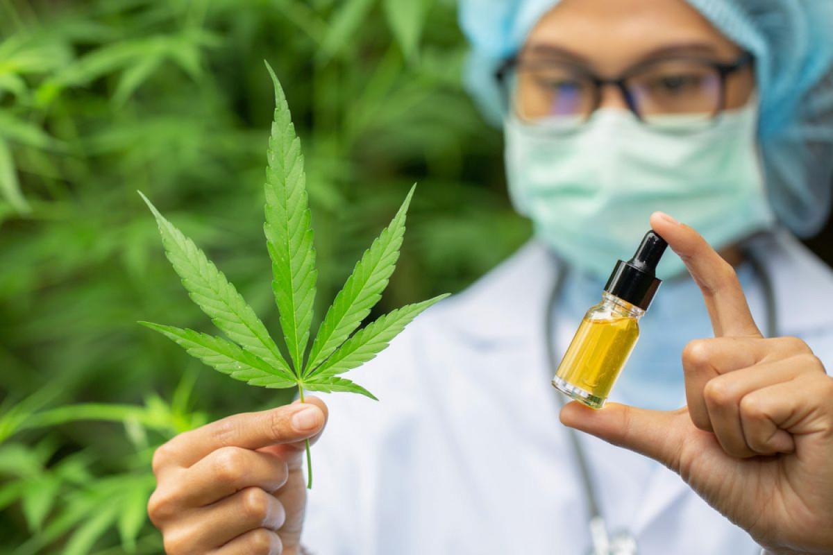 Organic hemp flower means the buds of CBD dominati...
